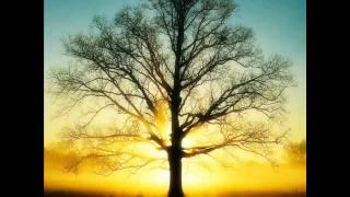 Lenka Filipová - Strom