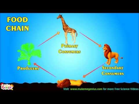 Food Chains , Food Webs , Energy Pyramid - Education Video For Kids By Makemegenius.com