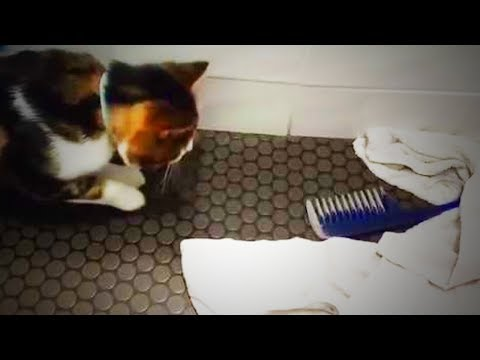Cats Vs. Comb 😹😹 Funny Cats Reaction To The Comb (Full) [Funny Pets]
