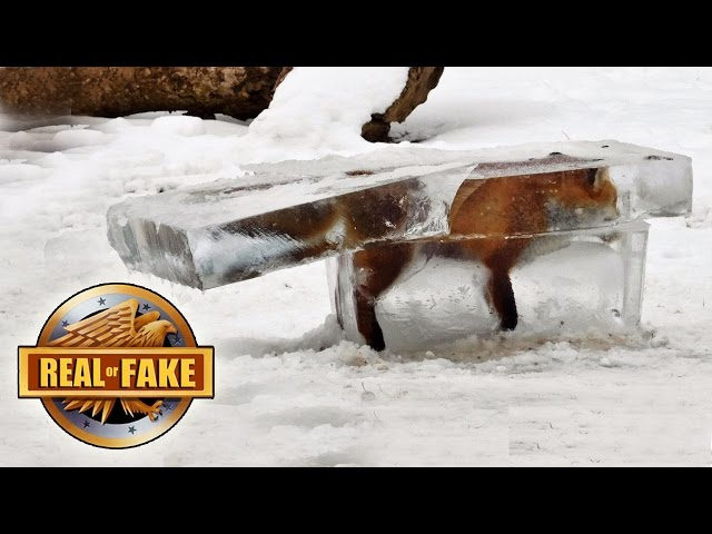 4 ANIMALS FROZEN ALIVE - real or fake?