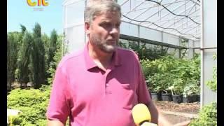 СТС-Курск. Питомник растений. 7 июня 2013(, 2013-06-10T10:04:43.000Z)