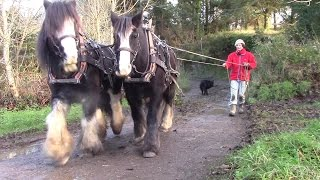 When One Horse Is Not Enough - Horse-Logging With Two Irish Cobs
