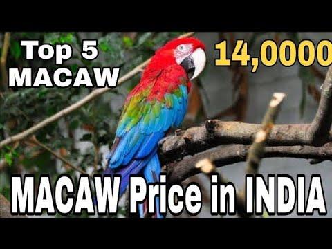 MY BIRDS PICS: PARROT'S PRICE IN INDIA