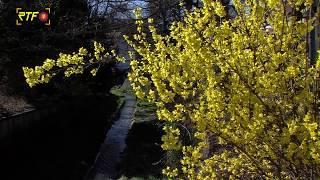 Trotz Corona - Es wird Frühling
