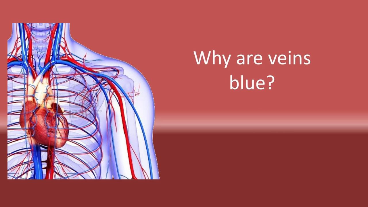 red and blue veins