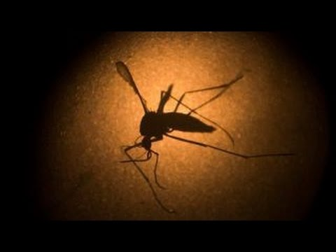 The advances in fight against Zika