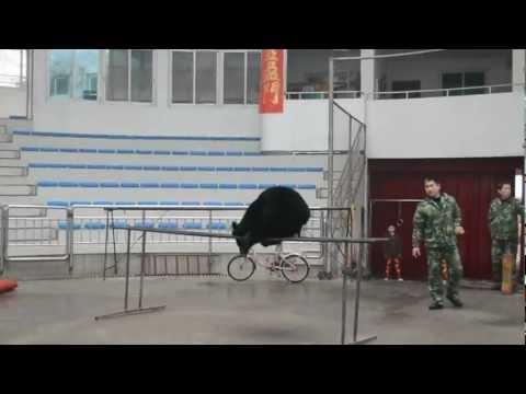 Ryosuke @ Hangzhou Zoo, Hangzhou, China
