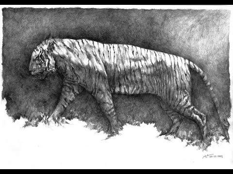 Top 5 Recently Extinct Animals Within Past Decades