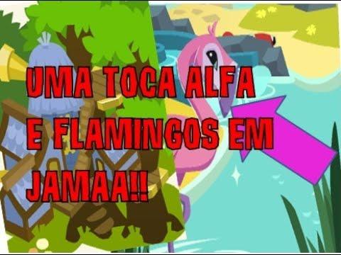 UMA TOCA ALFA E FLAMINGOS EM JAMAA!!