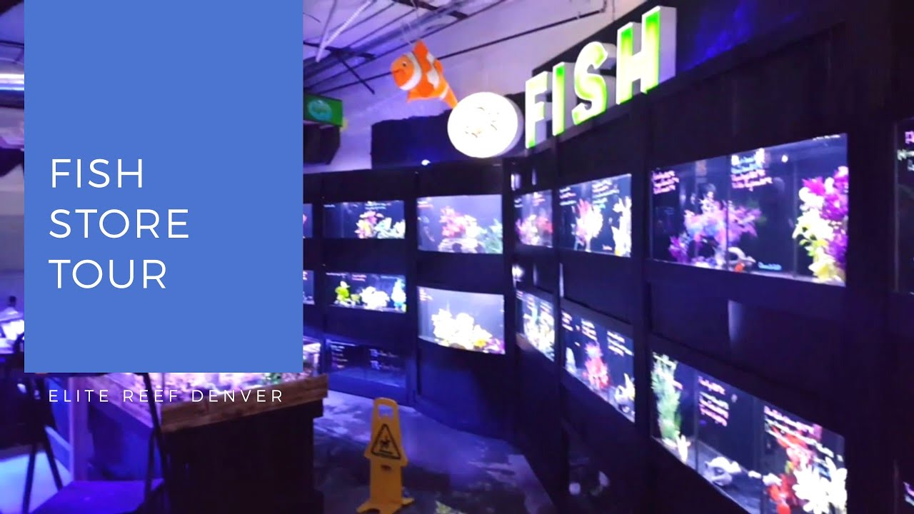 elite reef denver colorado fish store tour youtube