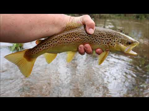 Dirty water trout fishing success with soft plastic baits