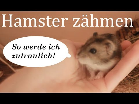 Hamster zhmen: So wird Euer Hamster zahm!