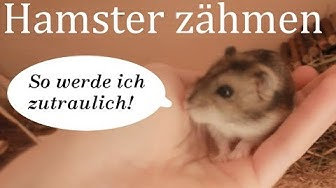 Hamster zähmen: So wird Euer Hamster zahm!