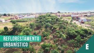 Arborização e Revegetação nos loteamentos - Emais Urbanismo