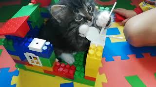Домик для кота своими руками из лего