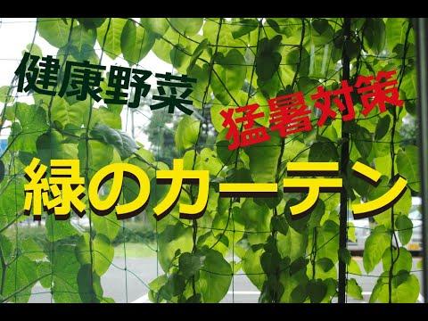 快適!グリーンカーテン生活~オカワカメの栽培と食べ方~