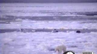 Polar bear passing by ice horizon