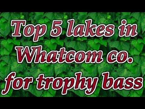EP.1: Top 5 Lakes In Whatcom County To Catch Trophy Bass