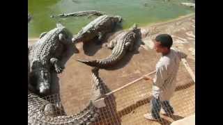 djerba tunezja 2013 krokodyl DUNDEE
