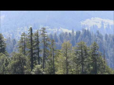 James Bobo Fay Bigfoot Sighting near Bald Hills Rd California