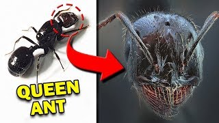 10-most-terrifying-insects-seen-from-close-distance