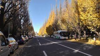 2014年12月2日に撮影。上野公園の紅葉(黄葉)はまだ見頃、逆に神宮外苑...