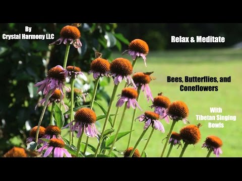 Relaxation/Meditation - 20 Minutes: Bees Butterflies and Coneflowers with Tibetan Singing Bowls