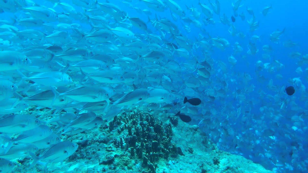 blue corner palau - HD1920×1080