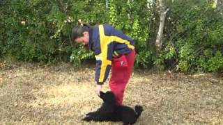 Dogsmith Training Camp - 'just For Fun' Rally Obedience