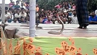 shap khela bd