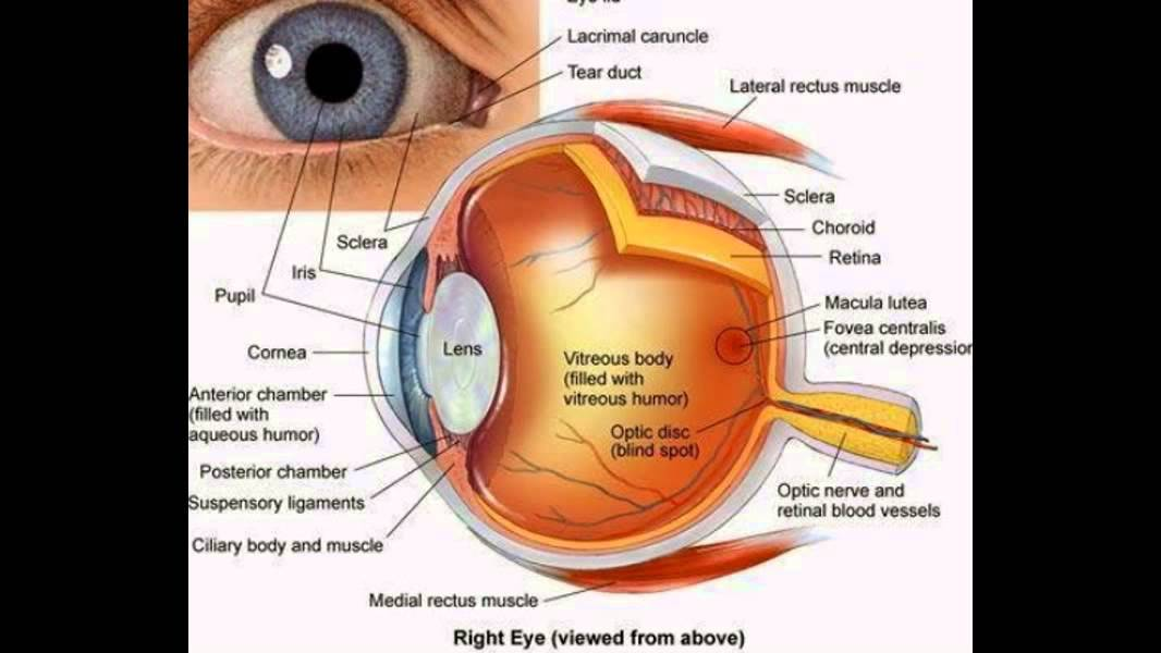Parts Of The Eye And Functions Youtube