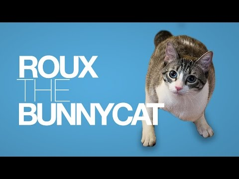 Cat With Two Legs - Roux the Bunnycat | Panther and Bunnycat