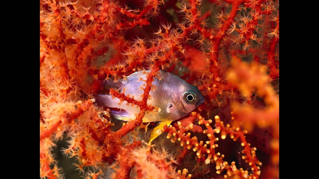 Los peces mas hermosos del mundo djcarrel youtube - Los peces mas bonitos del mundo ...