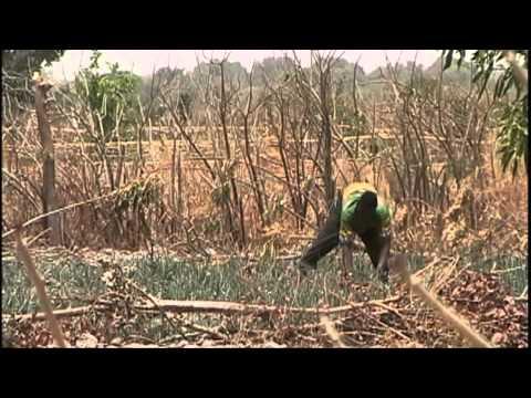 Economic Impact of Farm Subsidies
