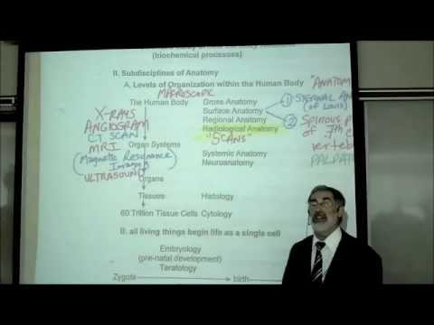 INTRO TO HUMAN ANATOMY by PROFESSOR FINK