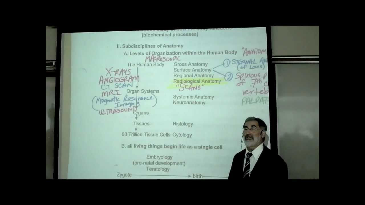 Intro To Human Anatomy By Professor Fink Youtube