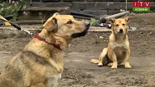 Ірпінь впроваджує уроки любові до тварин