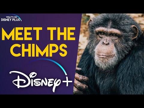 """Meet The Chimps"" Coming Soon To Disney+ | Disney Plus News"