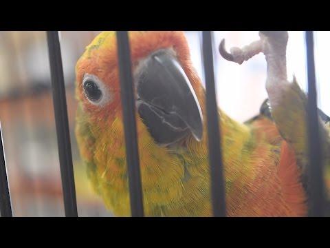 Pratt's Pets & Feed - Your Neighborhood Zoo