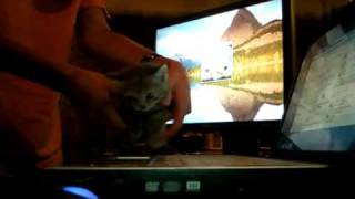 BASSHUNTER SANDSTORM FUNNY  CUTE CAT WITH GLOWING BLUE EYES DANCING SONG