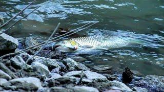 Çoruh Nehrinde Heyecan Dolu Kasna Avı  AT-ÇEK  POPPER  TİLKİ
