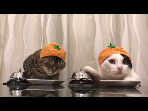 Cats Wearing Hats Ring Bell For Food