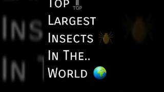 Top 27 largest insects in the world