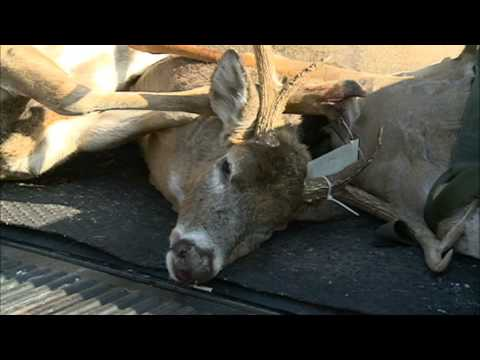 DNR Sees Rise In Deer Baiting In MN