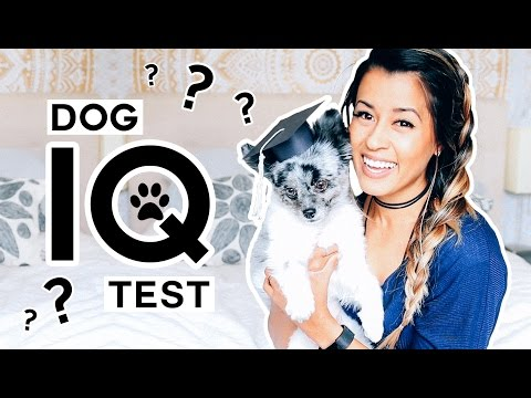 TESTING MY DOG'S INTELLIGENCE! Dog IQ Test w/ Samson | Ariel Hamilton