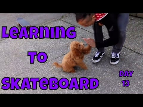 Gin The Puppy Learning to Skateboard - Learning to Skateboard VOL. 9