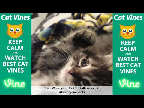 Funniest Cat Vines #129 - Updated September 21st, 2015