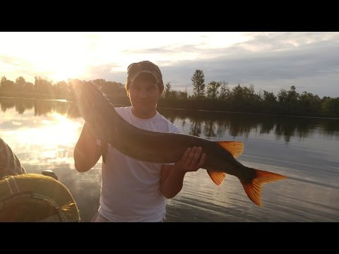 Kars Krew - Fishing - Rideau River Pt. 4 - Big Musky