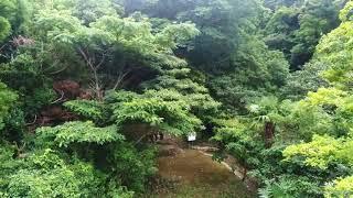6月27日に皇太子さまが見学なされた、美波町東由岐大池にある日本最古の...