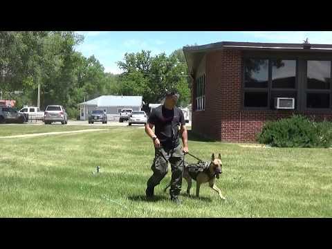 Meet Murray, the new K-9 Deputy Sheriff in Routt County, Colorado